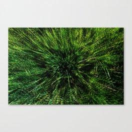zieleń Canvas Print