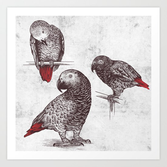Three Grey Parrots Art Print