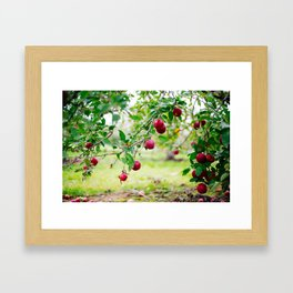Apples Framed Art Print