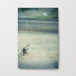Rabid Chihuahua Metal Print