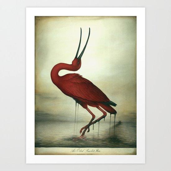 Oiled Scarlet Ibis Art Print