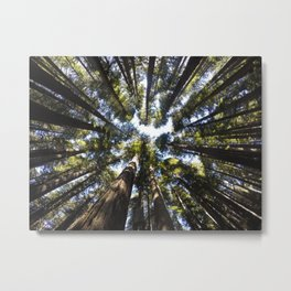 Giant Redwoods Metal Print