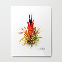 Tillandsia IO Ionantha Air Plant Watercolors Metal Print