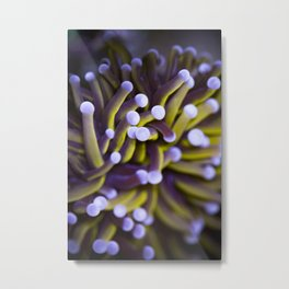 Coral Euphylia Golden Torch Metal Print