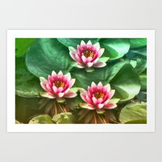 Waterlilies delicate Art Print