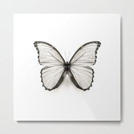 Mono Morpho Butterfly Metal Print