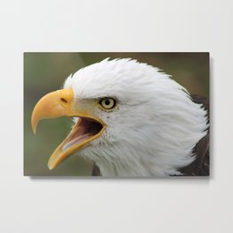 American Bald Eagle Calling Metal Print