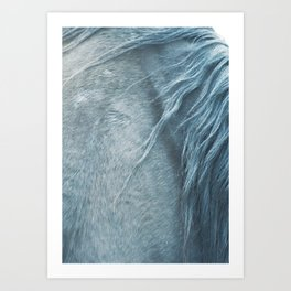 Wild horse photography, fine art print of the mane, for animal lovers, home decor Art Print