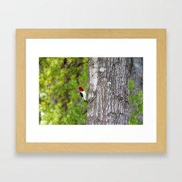 Red-headed Woodpecker Framed Art Print