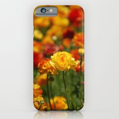Yellow and orange ranunculus flower Slim Case iPhone 6s