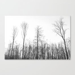 lonely and cold. Canvas Print