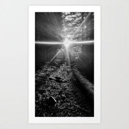 Follow the Sunlit Path Art Print