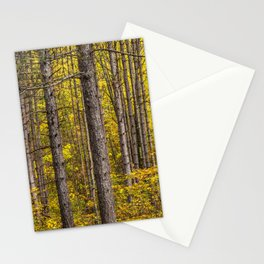 Fall Colors among Pine Trees Stationery Cards