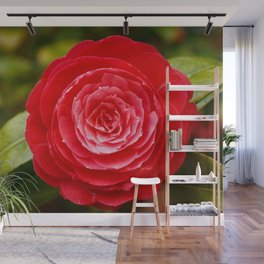 Camellia japonica Wall Mural
