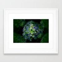 hydrangea Framed Art Prints featuring Hydrangea by Sartoris ART