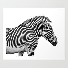 Animal Photography | Zebra | Minimalism | Wildlife Art | Black and White Art Print