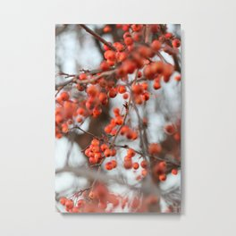 Winter's Lingering Cl= Color Metal Print