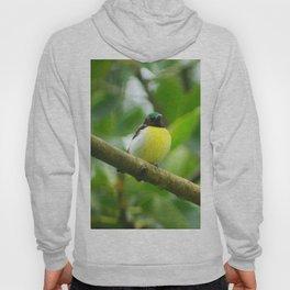 Sunbird Hoody