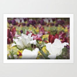 Color Pop with the Beautiful Tulip Art Print