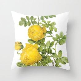 Botanical Print, Yellow Roses, Rosa Sulfurea Throw Pillow