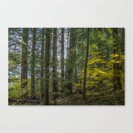 The Woods Around Clear Lake Canvas Print