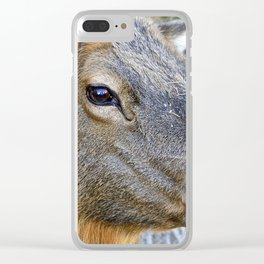 Look Me in the Eye Clear iPhone Case
