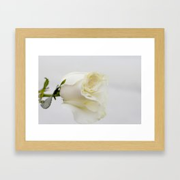 White Rose with Unfolding Petals Photograph Framed Art Print