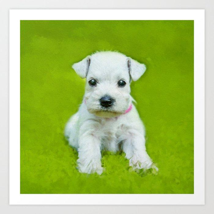 White Schnauzer Puppy Kunstdrucke