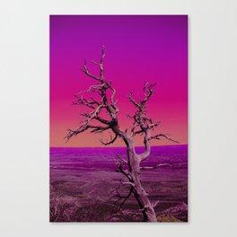 Craze Canvas Print