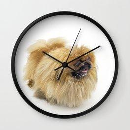 Pekingese Wall Clock