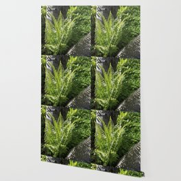 Ferns - leaves and shadows - against birch bark Wallpaper
