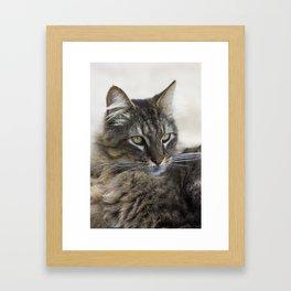 Hobo the Cat Framed Art Print