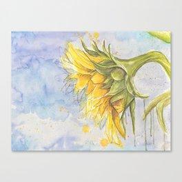 Helianthus annuus: Sunflower Abstraction Canvas Print