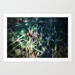 Cattails 5 Art Print