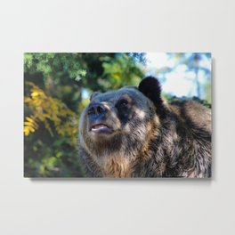 sunny bear Metal Print