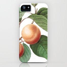 Apricot art of Nature, flower print, botanical illustration iPhone Case