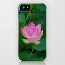 Lotus Blossom Flower 28 iPhone Case