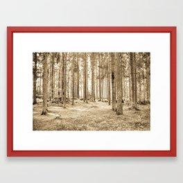 Tree Trunks III Framed Art Print