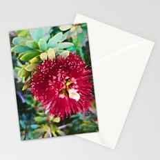 Light on a Red Flower 2 Stationery Cards