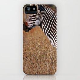 Zebra in the sunlight, Africa wildlife iPhone Case