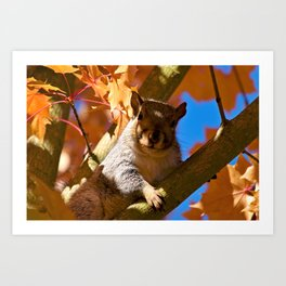 The Watcher in the Tree Art Print