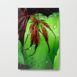 Maples and Lilies. Metal Print