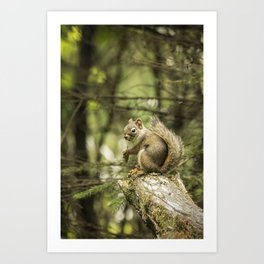Who You Calling Squirrelly? Art Print