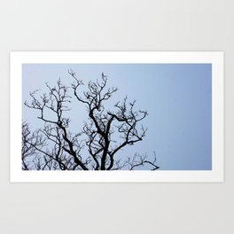 Stretching dark bare branches and blue sky Art Print
