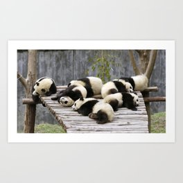 Marvelous Group Of Gracious Little Panda Bears Dozing On Pier Ultra High Quality Art Print
