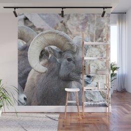 Watercolor Sheep, Bighorn Ram 40, Drake, Colorado Wall Mural
