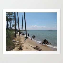 Chesapeake Bay Drift Wood Art Print