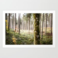 In The Woods I Art Print
