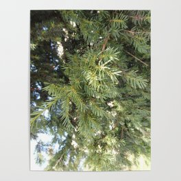 Yew-tree Poster
