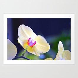 Single Orchid bloom Art Print